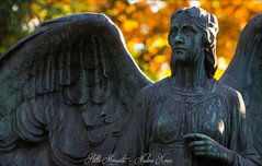 Magical Autumn Light (darkangel1910) Tags: autumn love liebe herbst licht magic light forthelovetothedetail angel angels flügel wings engel melaten friedhof ausdemherzenfotografiert liebezurfotografie leidenschaft passion photo photography europa deutschland köln cologne fotografie friedhöfe cemeteries cemetery cimetière cimitero herbstblätter leaves mood vibes herbststimmung magical