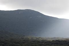 Baño de luz (ramosblancor) Tags: naturaleza nature paisaje landscape alcornocales bosque forest mediterráneo mediterranean corkoakforest mediterraneanforest montemediterráneo luz light sol sun rayos beams cádiz andalucía españa spain