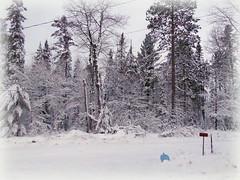 Trash day (yooperann) Tags: gwinn trash garbage blue bag snowy day upper peninsula michigan winter