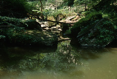 Clifty Falls State Park, Indiana (Roger Gerbig) Tags: cliftyfallsstatepark madison indiana canoneos3 rogergerbig canonef28105mmf3545 e100g kodak slidefilm transparencyfilm 35mm 135film