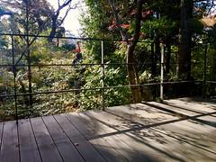 scented by yuzu darjeeling (deziluzija) Tags: cafe garden kengokuma koyo nezumuseum