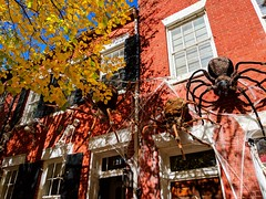 Halloween takeover (ekelly80) Tags: dc washingtondc fall november2018 virginia alexandria oldtownalexandria fallcolors fallfoliage halloween decorations spiders house spiderweb leaves golden yellow sun