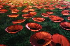 Flowers For The People (orkomedix) Tags: canon eosr night world war wwi poppies koeningsplatz art project never again niemalswieder mohnblumen munich germany rf24105f4l fog mist remembrance