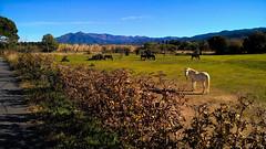 Chevaux... (Isabelle****) Tags: céret pyrénéesorientales france montagnes chevaux paysage pré