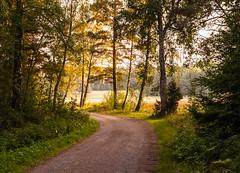 Country Road (P. Burtu) Tags: landsväg sverige sweden väg landet landsbygd countryside country farm gård sommar sollentuna solnedgång sunset nature natur träd skog gräs countryroad