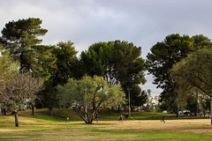 Trees (and wildlife) in an urban park (Stephen G Nelson) Tags: tree park tucson arizona landscape kids