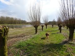 2018-0083 (schuttermajoor) Tags: airedaleterrier almere hond nederland che 2018 pionierspad hogevaart