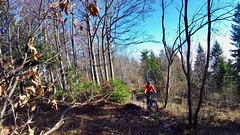 Way Up (29in.CH) Tags: fall autumn fatbike ride 15112018 forest trail trees