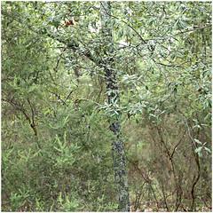 pievasciata 16 (beauty of all things) Tags: italien toskana pievasciata skulpturenpark quadratisch green grün flora trees bäume