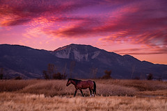 slide mountain (Aaron_Smith_Wolfe_Photography) Tags: wildhorses nevada sierra mountains slidemountain washoevalley wetlands nikon d850 sunset colors