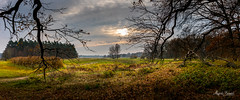 Rogalin Landscape Park (Magda Banach) Tags: canon canoneos5dmarkiv rogalinlandscapepark autumn clouds colors flora nature outdoor outside park plants poland sky sunset trees view