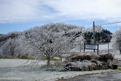 Rockbridge Vineyard, Raphine, VA (nataliekrovetz) Tags: xt2 ice winter vineyard fujifilmxt2 icestorm raphine virginia trees