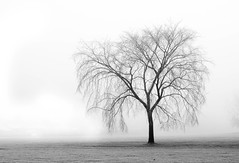 Fog & Frost 2 (MattPokluda) Tags: foggy nikon d5200 35mm windsor ontario canada walker black photography white moody light texture