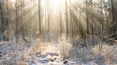 Winter (--Conrad-N--) Tags: winter tree trees forest ice beams light cold fence