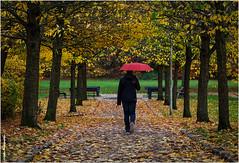 von dannen ziehen (geka_photo) Tags: gekaphoto kiel schleswigholstein deutschland herbst ellerbek jugend menschen regenschirm rot stadtrathahnpark