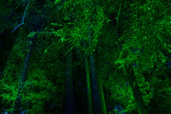 Night Forest (josullivan.59) Tags: 2018 artistic bc britishcolumbia buchart canada vancouverisland abstract black forest garden green light lightanddark longexposure nicelight night outdoor outside rainforest texture travel trees wallpaper woods