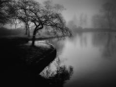 Winter Blossom (Bill Eiffert) Tags: tree blossom nature water lake birds landscape waterscape mist blackandwhite absoluteblackandwhite
