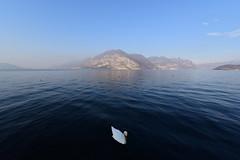 Lago d'Iseo, Italy, December 2018 033 (tango-) Tags: iseo lagoiseo iseolake lagodiseo lombardia italia italien italie italy