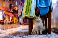 colourful (㋡ Aziz) Tags: cat color green blue red yellow street portrait colors 3d dof fujifilm 35mm bokeh night light eyes sweet rain xt2 city