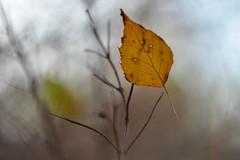 Autumn (agnieszka.a.morawska) Tags: helios helios44m bkhq beyondbokeh bokehlicious bokeh leaf autumn