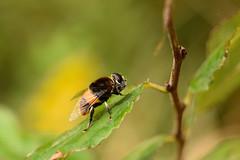 DSC_6719 (Hachimaki123) Tags: 所沢航空記念公園 tokorozawaaviationmemorialpark 日本 japan 所沢市 埼玉県 所沢 tokorozawa saitama animal insect insecto 虫 動物