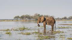 Serenity (Tris Enticknap) Tags: africanelephant zambia elephant lowerzambezi africa loxodontaafricana