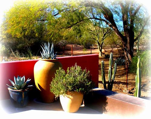 a desert garden walk