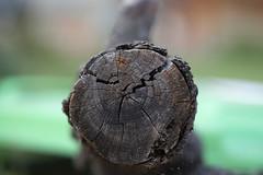 (bigboysdad) Tags: log tree wood nikond800e tokina100mmf28