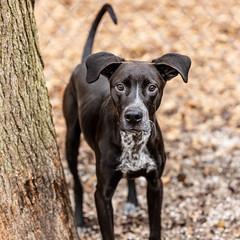 Albus18Jan201917.jpg (fredstrobel) Tags: dogs pawsatanta atlanta usa animals ga pets places pawsdogs decatur georgia unitedstates us