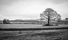 Abandoned barn and tree (Rob A Dickinson) Tags: nikon d7100 nikkor24120mmf4 derbeyshire peak district lead mine blackandwhite monochrome crumbling barn tree abandoned decayed unused