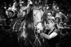Getting Down (Tom Levold (www.levold.de/photosphere)) Tags: afsvrzoomnikkor70300 cologne d700 köln nikon race racetrack rennbahn bw sw porträt portrait horse pferd