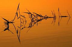 ... (ᗰᗩᖇᓰᗩ ☼ Xᕮ∩〇Ụ) Tags: αντανακλαση φωσ νερο υδωρ ηλιοσ φυτα στιγμεσ moments reflection spiegelung momente πατριδα ελλασ ελλαδα griechenland wasser meer canoneos1100d abstrakt abstract motion emotion goldenlight naturelover