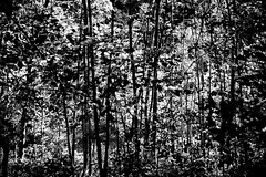 Exalté / Exalted (fidgi) Tags: paris boisdevincennes bw nb monochrome abstract abstrait arbre tree shadow ombre lumière light canon lignes lines canoneos5dmk3 tamron