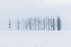 Les soldats (FERY Anthony Photographie) Tags: pentax pentaxk3 sigma froid ice blanc white arbre hiver neige france meuse lorraine grandest paysage landscape