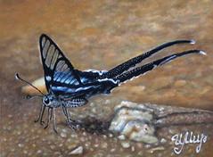 Butterfly (irishishka) Tags: pastel pastelpainting art artirishishka drawing drypastel realism butterfly insects animals figurative surrealism painting