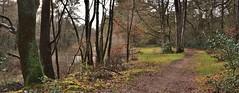 De 'Finse meertjes' op het Uffelterzand (henkmulder887) Tags: holtingerveld holtingerzand uffelterzand finsemeertjes natura2000 drenthe zwdrenthe natuur natur nature natura bos meertje drenthepad roodgeel wandelen wild ree das vos np nationaalpark