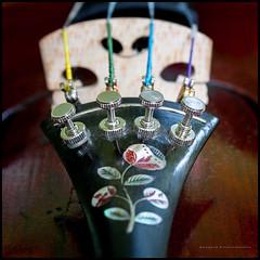 Inlaid tail piece (G. Postlethwaite esq.) Tags: canon40d canonefs60mmmacro dof macro adjusters beyondbokeh bokeh closeup depthoffield inlay motherofpearl musicalinstrument photoborder primelens selectivefocus strings tailpiece violin