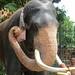 Elephant Portrait (1X7A4587b)