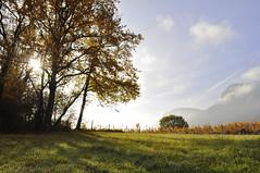 Les vignes du Granier (E.D.D.A.) Tags: rural ruralité agriculture vignoble vigne savoie automne lumière soleil