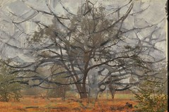 gray tree (holly hop) Tags: fog november home butcherst morning starnaud mondrian graytree overlay painting tree eucalyptus australia