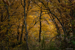 En (AvideCai) Tags: avidecai paisaje bosque arboles tamron2470 otoño