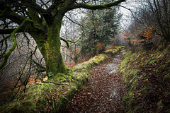 Exmoor, England (Phil Spalding) Tags: exmoor national park england exford winter autumn walking rambling exmoornationalpark exmoornationalreserve moody tree moss leaves canon 6d 24104 llens atmosphere atmospheric