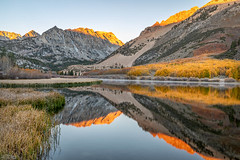 Morning Glow (Kirk Lougheed) Tags: california easternsierra inyocounty inyonationalforest northlake populustremuloides sierranevada sierras usa unitedstates alpenglow aspen lake landscape mountain mountainside outdoor plant reeds reflection sunrise tree water