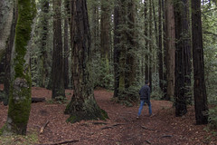 KLoE_img_9946 (kloe_chan) Tags: joaquin miller park hike oakland berkeley bay area family trees