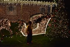 DSC_4977 (earthdog) Tags: 2018 needstags needstitle nikon nikond5600 d5600 18300mmf3563 christmas decoration light christmaslight sanjose willowglen