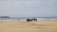 2016-01-08_14-39-41_ILCE-6000_DSC02674 (Miguel Discart (Photos Vrac)) Tags: 2016 75mm animal animalphotography animals animalsupclose animaux beach citytrip epz1650mmf3556oss essaouira focallength75mm focallengthin35mmformat75mm holiday ilce6000 iso100 landscape maroc meteo morocco nature naturephotography panorama plage sony sonyilce6000 sonyilce6000epz1650mmf3556oss sport travel vacance vacances voyage weather