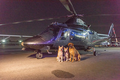 Ruff Cutz's Dogs Posing in front of a Helicopter (SCSQ4) Tags: california compton dogs favorite favoritepicture helicopter influenceartists ruffcutzsdogs threedogs tomorrowsaeronauticalmuseum
