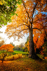 Autumn colors (dannygreyton) Tags: autumn fujifilmxt2 fujifilm fujinon1024mm fall alnarp sweden malmoe malmo malmö park trees colorful leafs orange forest