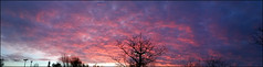 Day 318 (kostolany244) Tags: 3652018 onemonth2018 november day318 14112018 kostolany244 samsunggalaxys5 europe germany geo:country=germany month panorama trees sunset 365the2018edition