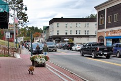 Lake Placid  New York - Main Street Commercial Area -- Wild Fox  Walking (Onasill ~ Bill Badzo) Tags: thehaus lodging hotel fox candid animal main street mirror lake 150 chevy pick up truck usa unitedstates eastern mountain sports wear andirondacks andirondack store lakeplacid commercial area district nrhp decorative arts crafts rustic furnishing wheel chair nap hat flower downtown canon sl1 eos rebel sigma macro 18250mm vacation travel onasill starbucks essexcounty franklincounty 245 tourist shop building window bike people